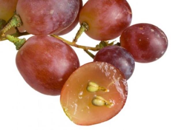 Weintrauben enthalten die meisten Polyphenole – Warum ist das wichtig?