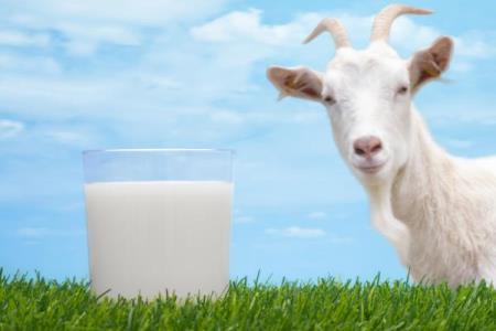 Was Sie über Ziegenmilch wissen müssen